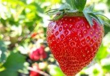 Prawidłowa strategia ochrony plantacji a opłacalna produkcja