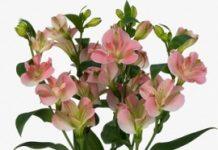 Najbardziej obiecujące produkty kwiaciarskie
