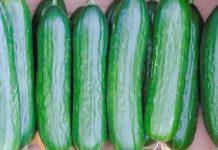 Rosja: 700 tys. ton warzyw spod szkła
