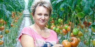Pomidory wielkoowocowe po ogłowieniu