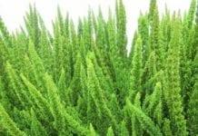 Co nowego w uprawie roślin wrzosowatych?