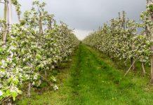 O ochronie na XXX Święcie Kwitnącej Jabłoni w Samborcu