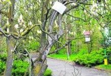 Razem z Czechami uratujemy przyrodniczy raj w Prószkowie