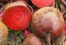 Drogie warzywa korzeniowe na Ukrainie