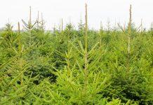 Premie na zalesianie