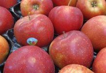 Łatwiej wwieźć jabłka do Indii