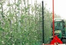 Do mechanicznego przerzedzania jabłoni