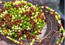 Owocujące pędy – ważny materiał florystyczny (cz. I)