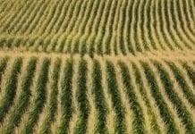 Areał upraw GMO na świecie wzrósł o 3 proc. w 2016 roku