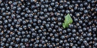 Skup owoców – o tym trzeba pamiętać