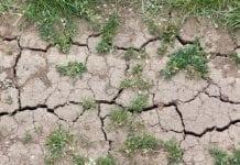 Zapobiec suszy – działania w woj. łódzkim