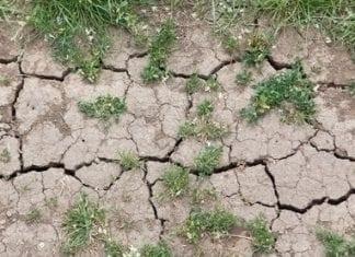 Syngenta walczy ze zmianą klimatu