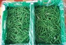 Przedłuż trwałość strąków fasoli