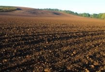 Czy można zwiększyć plon i poprawić właściwości gleby preparatami mikrobiologicznymi?