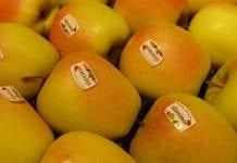 W Południowym Tyrolu hurtowe ceny jabłek wciąż rosną