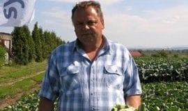 Warzywa kapustne – odmiany, nawożenie, osłony