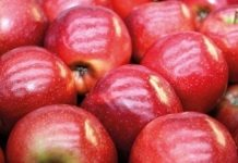 Sprzedaż jabłek w UE – maj 2017