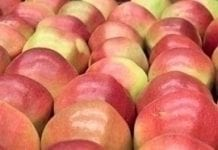 Eksport jabłek w lutym