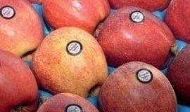 Fresh Market – perspektywy popytu i podaży
