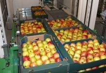 Unijny handel zagraniczny jabłkami