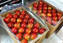 Rosja znowu zwiększa import jabłek
