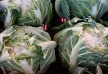 Przemysł przetwórczy warzyw. Analiza sytuacji