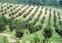 Zakładanie plantacji leszczyny