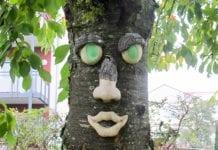 """Drzewa """"mądre i głupie"""""""