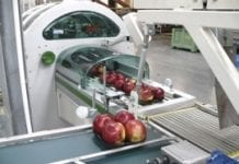 Nowoczesne sortowanie i pakowanie jabłek