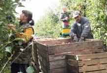 Praca w bułgarskim ogrodnictwie. Umowy na 4 godziny
