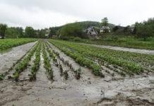 300 tys. zł na odtworzenie potencjału produkcji rolnej