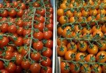 25% spadek eksportu pomidorów z Maroka