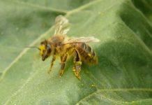 O pszczoły trzeba dbać