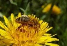 Nie zapominajmy o pszczołach