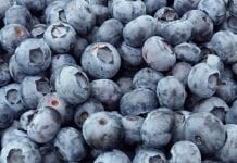 Mołdawskie jagodowe
