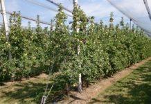 Powierzchnia bawarskich sadów się kurczy