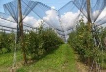 Sieci przeciwgradowe – dobra inwestycja