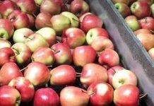 Przechowywanie owoców z dobrym wynikiem