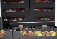 O handlu owocami z Rosją – przed sezonem