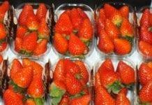O opakowaniach do owoców jagodowych