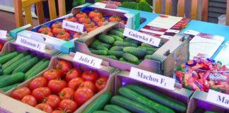 Pomidory z Przyborowa