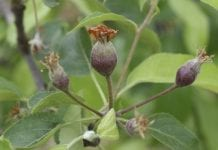 Spacerem po sadzie (5)