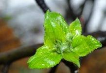 Ważny bor – zaplanuj nawożenie i dokarmianie dolistne