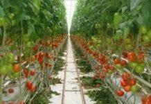 Zwiększyć wydajność upraw szklarniowych