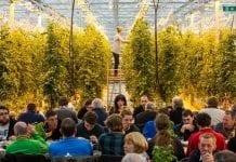 Agroturystyka po islandzku