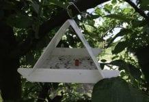 Owocówka jabłkóweczka – alert na 8 lipca 2016 r.