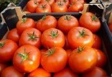 Rosja: nie zwiększy, ale zalegalizuje dostawy pomidorów
