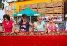 Dzień Ziemniaka Agrico Polska