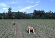 Era agrorobotów: usuwanie chwastów bez pracy rolnika?