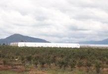 Gruzja przebudowuje sektor rolniczy